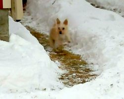 Puppy Hates The Snow, So Dad Spends Hours Digging A Snow Maze For Him To Play