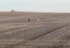 Man Finds His Missing Dog Running Across Field – But He Isn't Alone