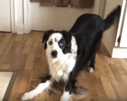 Mom Suggests An Apple Over Cookies For Dieting Dog, And It Doesn't Go Over So Well