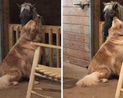 Dog Approaches Recently-Rescued, Sick Horse To Tell Him It's Going To Be Okay