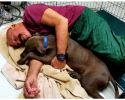 Humane Society Needs Dog-Snuggling Volunteers To Help Pups In Need