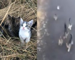 Ten Abandoned Kittens Start Chasing A Woman – A Mile Later, She Discovers Their Motive