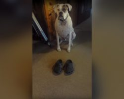 Dad Puts Shoes On The Floor In Front of His Dog. He Then Proceeds To Do a Hilarious Dance