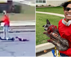 Woman Drags Dog Behind Her From Scooter Until His Paws Bleed, Laughs About It