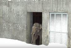 Zoo Closes After Blizzard But The Cameras Are Rolling When The Animals Come Out To Play