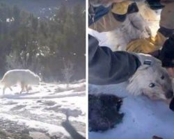 96 Days After Dog's Disappearance, Woman Spots Snowy Paw-Prints & Begins Her Search