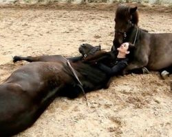 Mom Lies Down With Her 2 Big Horses, Then They Start Kissing Her And It Couldn't Get Cuter!