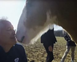 He Films Budweiser's Newborn Baby, But When THIS Happens, I Squealed!