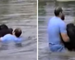 Scared Zoo Staff Won't Go Near Drowning Chimp, So Brave Man Jumps In To Rescue