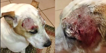 Family Demands Answers After Their Dog's Severely Wounded At PetSmart Groomer