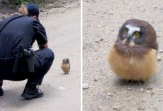 Cop Sees Tiny Owl In The Middle Of A Road, Has The Cutest Conversation With Her