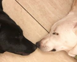 Final Plea For A Bonded Pair Of Dogs For Adoption Reaches Far And Wide