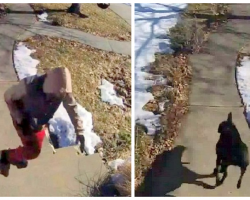 Package Thief Tries To Steal A $4 Item, Gets Caught And Chased By Family Dog