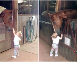Little Girl Falls In Love With Horses, Has Sweetest Daily Routine With Them