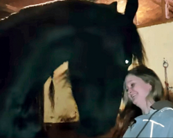 This Horse's Sneaky Way Of Getting Cuddles Will Melt Your Heart