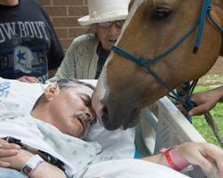 Wounded Veteran Remains Hospitalized. When You See Who Comes To Provide Him Comfort? WOW!