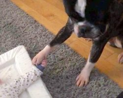 Mom Loses It As Loving Dog Holds His Baby Brother's Tiny Hand & Won't Let Go