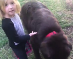 Little Girl Comes Up With Clever Excuse To Defend Her Guilty Gentle Giant