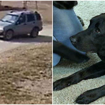 Family Furious After Postal Worker Ran Over Their Dog And Drove Away