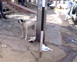 Mama Cries For Help For Her Pup, Puts Complete Trust In The People Who Show Up