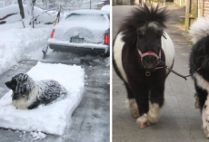 16 Pics That Show Newfoundlands Are A Little Different From Other Dogs