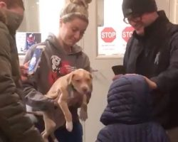 Parents surprise their son with puppy at animal shelter after their dog passed away