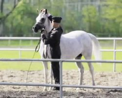 He Takes Off His Reins And Sets Him Free. Now Keep Your Eyes On The PERFECT Horse…