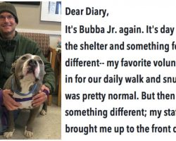 """Rescue dog is stuck at shelter for 94 days before his """"Favorite volunteer"""" brings him home"""