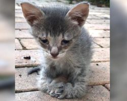 Sad kitten walks up to women on street, begging for someone to help him, but then she notices his paws