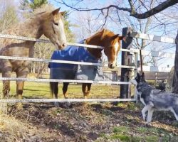 The Horses Approach The Dog. What Follows Is Too Great For Words!