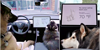 Tesla's 'Dog Mode:' Keeps Your Pups Cool, Lets Passersby Know They're Ok