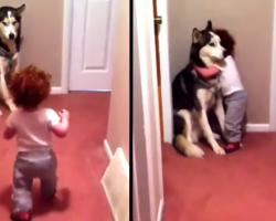 Toddler's Scared Of Vacuum, Runs To Husky Who Puts On A Brave Face For His Girl