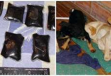 Veterinarian Busted For Smuggling Heroin Inside Puppies