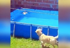 Dog Spots A Bird Drowning, His Instincts Take Over As He Goes Into Lifeguard-Mode