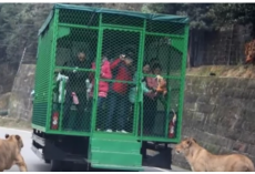 Revolutionary Chinese Zoo Lets Animals Roam Free, Puts Tourists In Cages