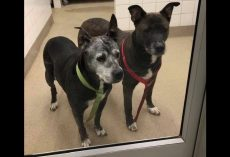 Senior dogs seeking new home after being abandoned by owners inside Petco bathroom