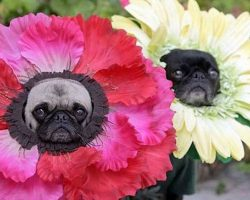30 Costumes That Prove Pugs Always Win At Halloween