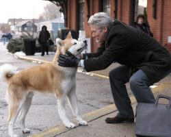 Top 25 Must See Movies for Dog Lovers