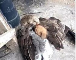 Touching moment of a goose keeping a puppy warm after it was abandoned on the street