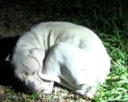 An abused puppy had completely given up. But watch when the police arrive…