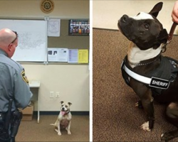 Instead of spending $15,000 on german shepherds, police are adopting rescue pit bulls