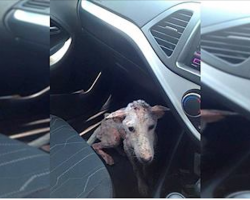 Beat-up homeless stray hops into woman's car, makes stunning transformation with love and care