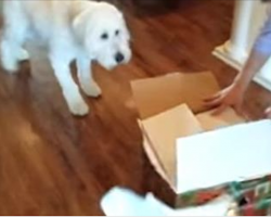 Dog Gets The Best Surprise Gift For His Birthday