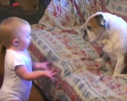 Dad Captures Baby Ranting To Their Bulldog, Baby's 'Conversation' Has The Internet Talking
