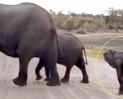 Baby elephant sneezes too hard, hilariously panics & scuttles to hide by mommy