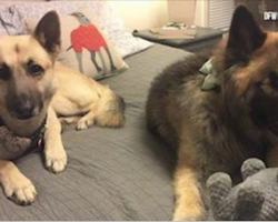 """Blind Pup And Her """"Seeing-Eye Dog"""" Are In Search Of A Forever Home Together"""
