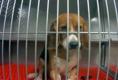 UPDATE: Cruel Pesticide Testing On Beagles At Michigan Lab To End Immediately