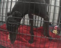 Greyhound Kept In A Tiny Cage At A Blood Bank Gets To See The Ocean