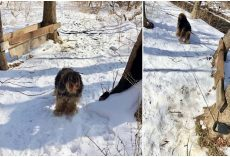 Dog Was Tied To A Tree & Left Outside To Die In Freezing Temps During Snowstorm