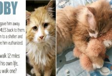 Lost Cat Walks 12 Miles To Find His Family Then They Take Him To Be Put Down